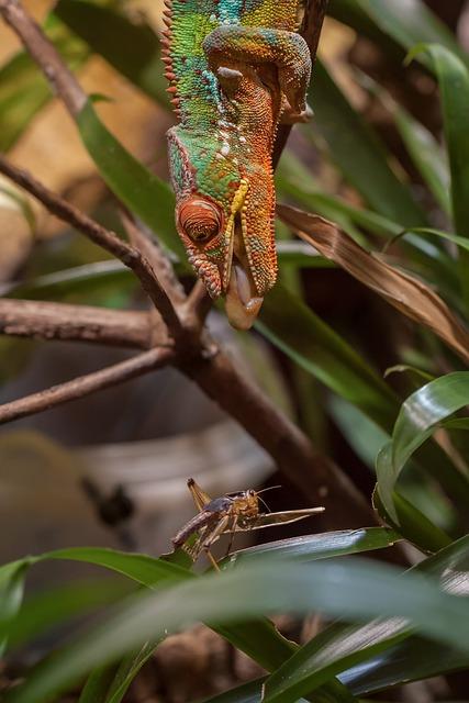 Chameleon, Animal World