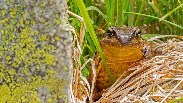 Common Toad, Toad, Amphibian, Animal World, Wild, High