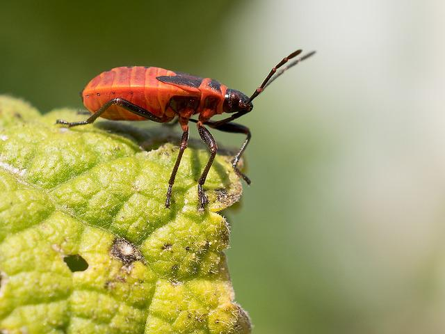 Insect, Nature, Animal World, Evertebrat, Beetle