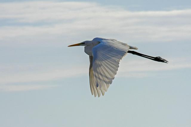 Bird, Animal World, Nature, Sky, Flight