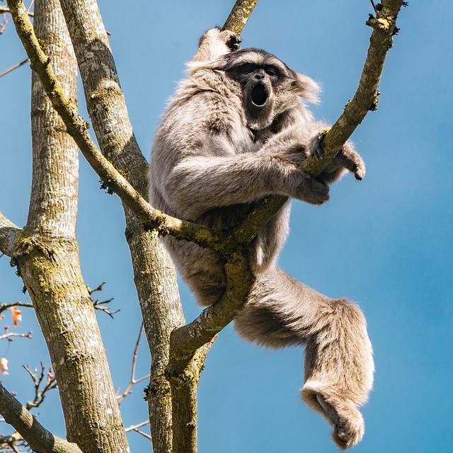 Monkey, Gibbon, Primate, Mammal, Animal World