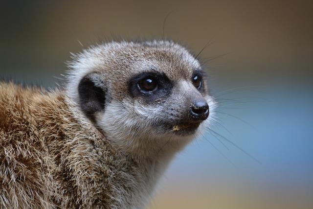 Mammal, Animal World, Cute, Animal