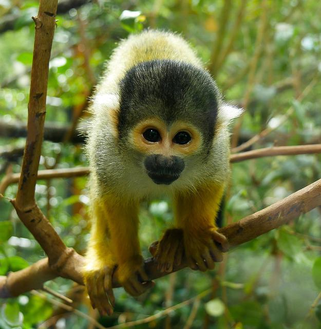Monkey, Primate, Animal World, Mammal, Cute, Capuchin