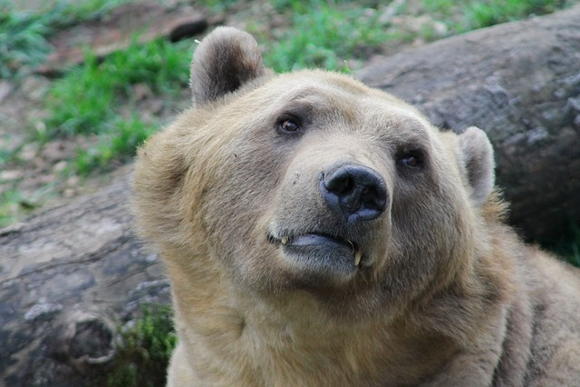 Mammal, Bear, Nature, Animal World, Animal, Wild