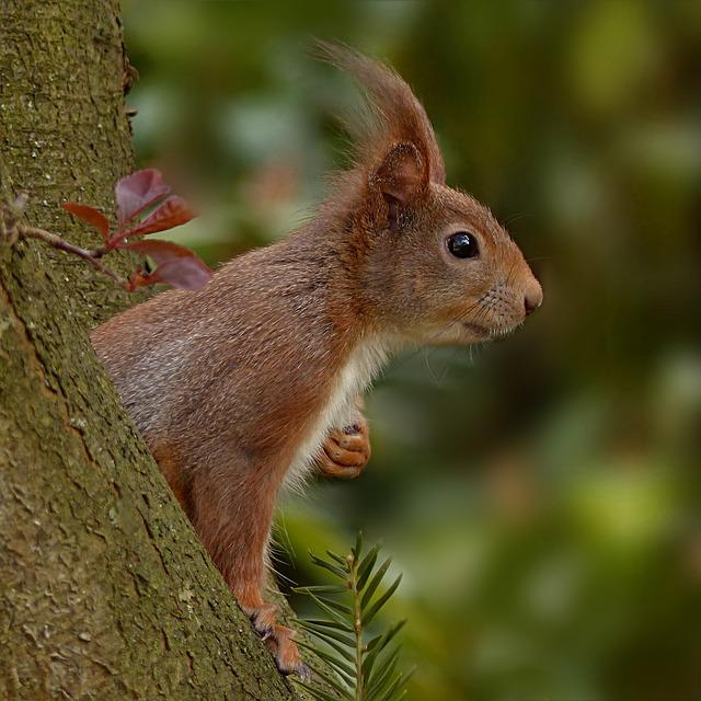 Animal World, Mammal, Rodent, Squirrel