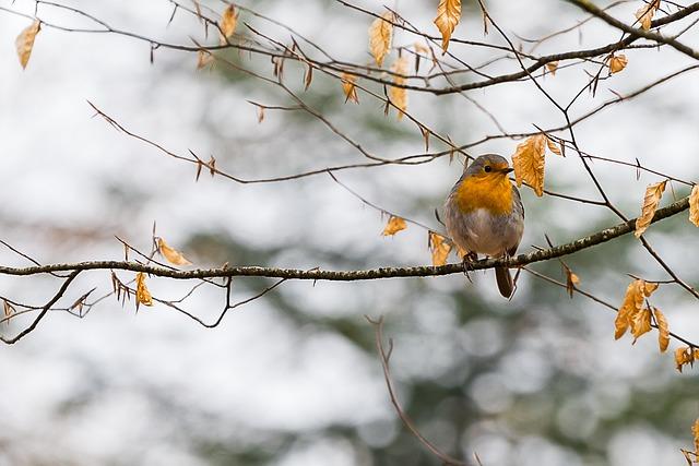 Nature, Bird, Animal World, Animal, Tree