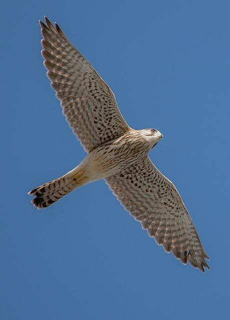 Bird, Nature, Animal World, Bird Of Prey