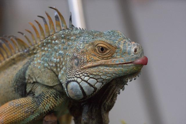 Reptile, Lizard, Animal, Nature, Animal World, Dragon