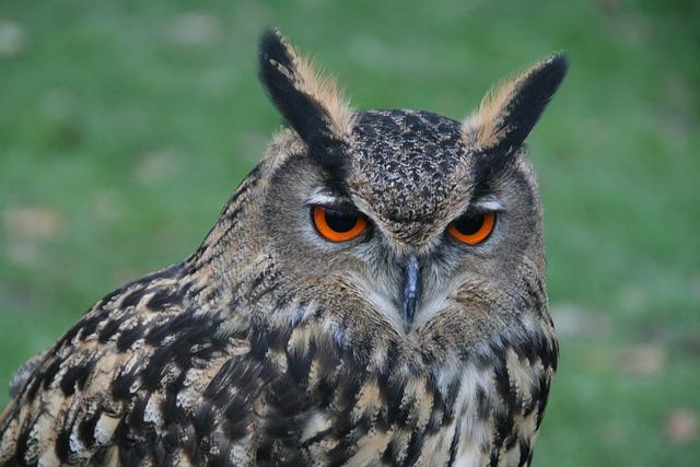 Bird Of Prey, Bird, Animal World, Owl, Eagle Owl