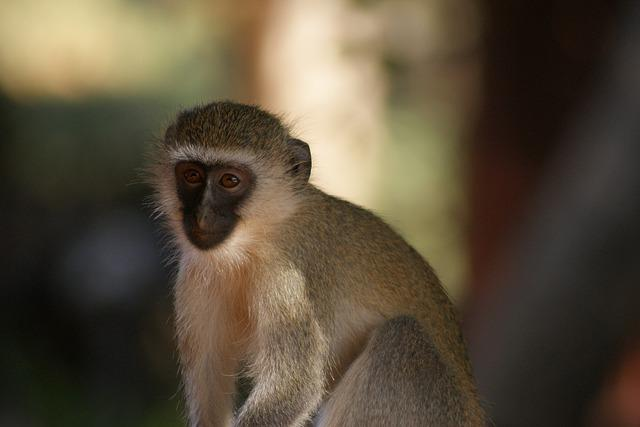 Monkey, Primate, Animal World