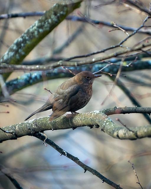 Blackbird, Bird, Animal World, Tree, Animal, Songbird