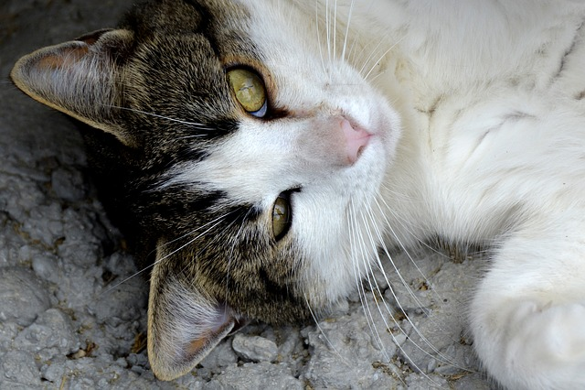 Cat, Animal, Pet, Young Cat, Curious, Young Animal
