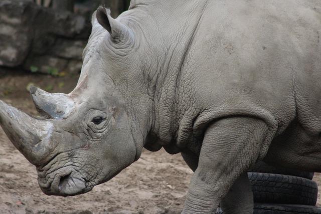 Zoo, Rhino, Animal, Zoo Animal, Wild Animal