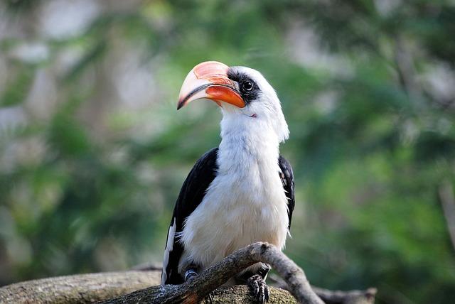 Bird, Hornbill, Zoo, Bill, Beak, Tropical Bird, Animal