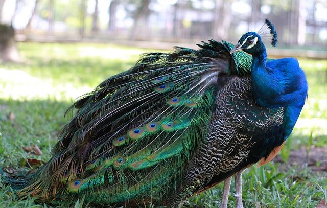 Birds, Pen, Nature, Tittup, Animalia, Poultry, Color