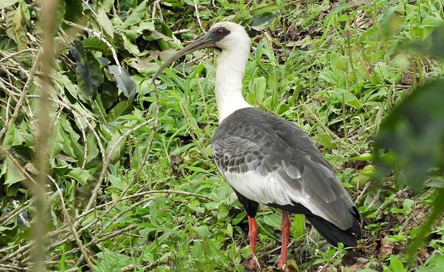Birds, Nature, Wild Life, Animalia, Peak
