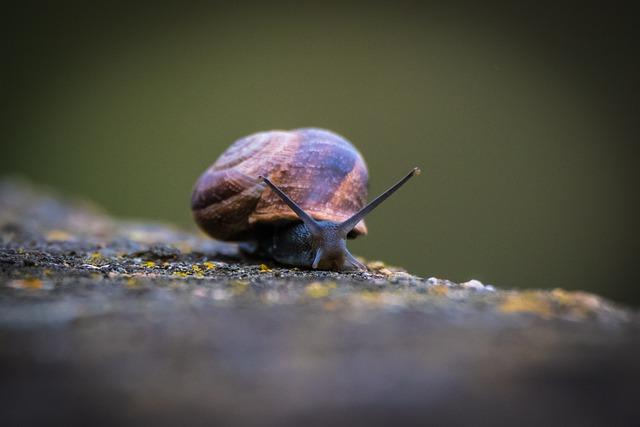 Invertebrate, Insect, Animalia, Nature, Slow, Snail