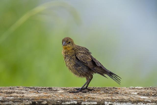 Wildlife, Nature, Birds, Animalia