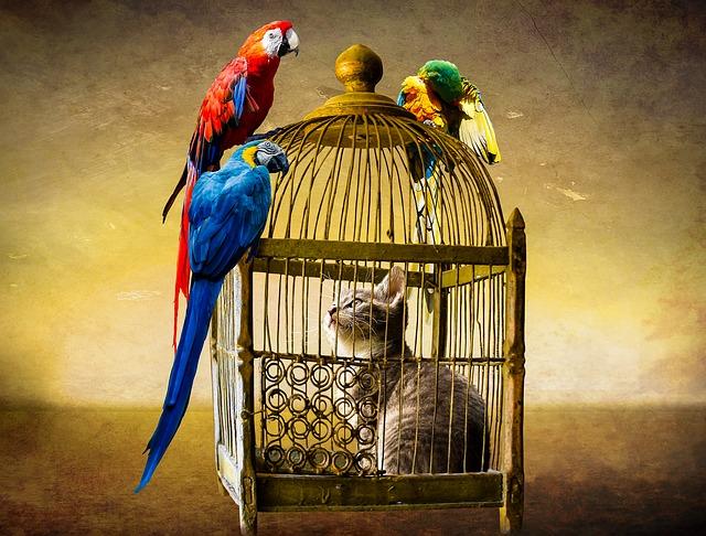 Animals, Cat, Bird, Parrot, Ara, Cage, Caught, Prison
