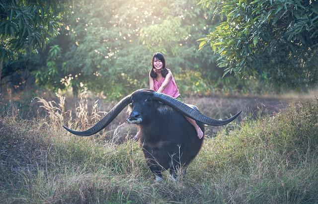 Buffalo, Girl, Seat, Mammal, Animals, Asia, Background