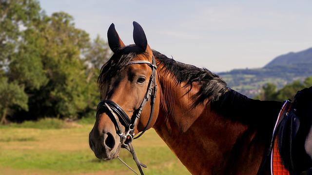 Horse, Head, Portrait, Attention, Compare, Animals