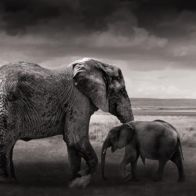 Elephant, Baby Elephant, Young, Animals, Africa