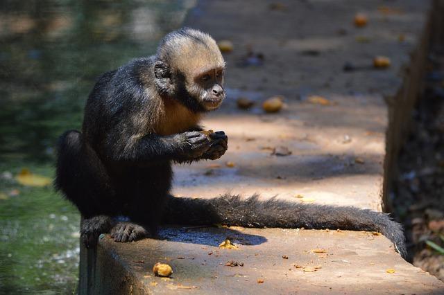 Monkey, Animals, Salvador, Bahia