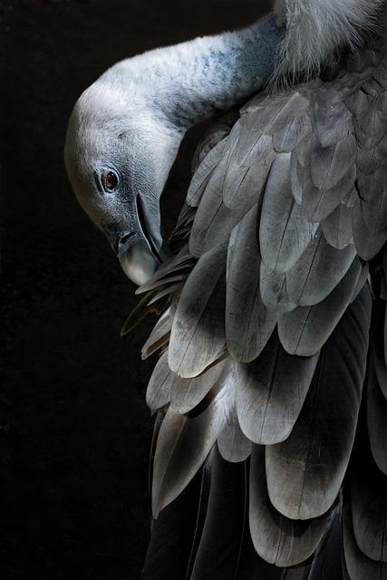 Zoo, Birds, Nature, Animals, Feathers, Animal