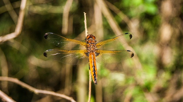 Dragonfly, Nature, Bug, Macro, Green, Summer, Animals