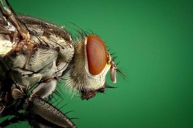 Housefly, Fly, Insect, Macro, Pest, Animals, Bug