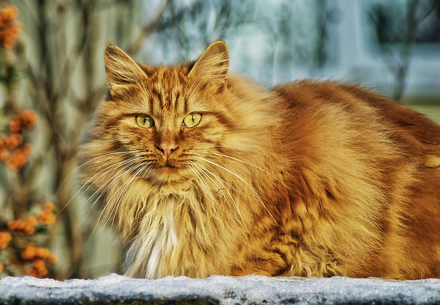 Cat, Feline, Cat Face, Cat's Eyes, Animals, Cat Nose