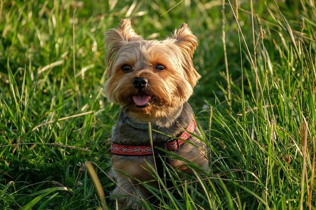 Lawn, A Little, Animals, Charming, Nature, Dog House