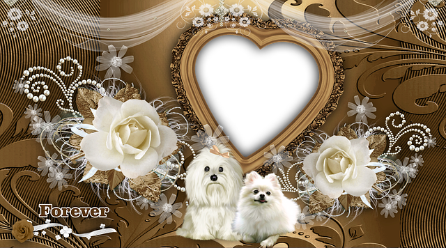 Animals, Puppies, Cute