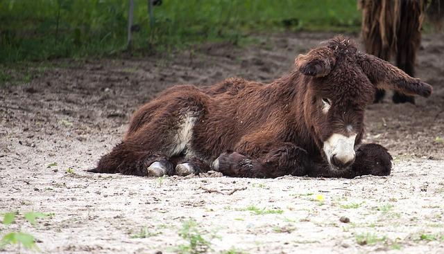 Donkey, Beast Of Burden, Rural, Ears, Animals