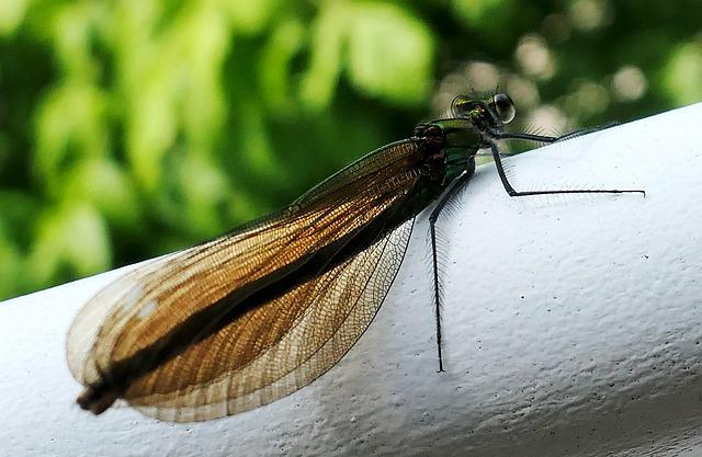 Insect, Dragonfly, Nature, Wing, Animals, Green
