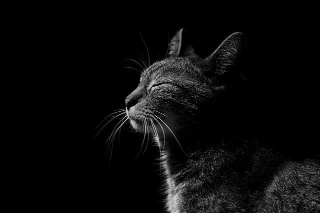 Cat, Glow, Animals, Fur, Face, Nice, Eyes, Portrait