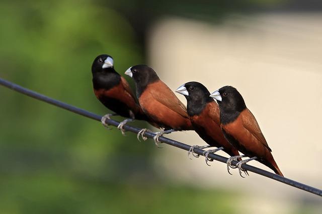 Birds, Feathers, Nature, Animals, Animal