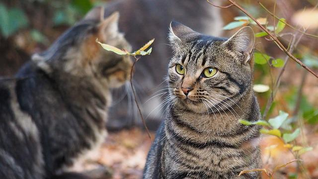 Animals, Feline, Cat, Stripes