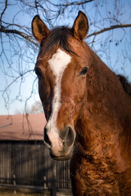 Horse, Animals, Reiterhof, Nature, Horse Stable