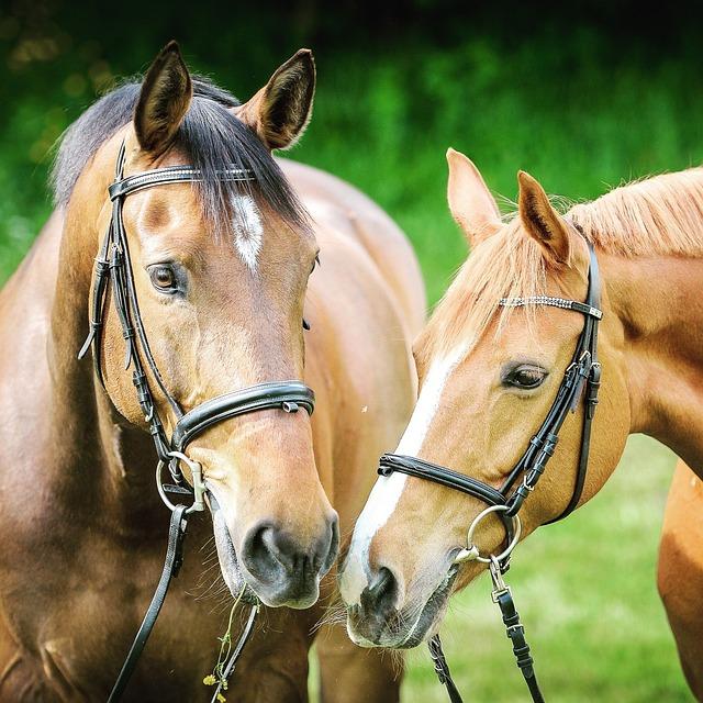 Animal Photography, Animals, Bridle, Close-up, Horses