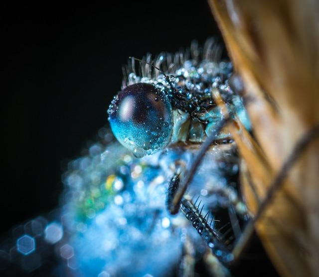 Insect, Science, Bespozvonochnoe, Animals, Nature