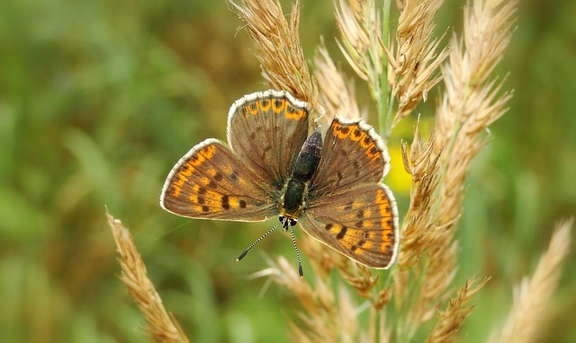 Butterfly Day, Nature, Insect, Animals, Plant