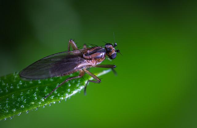 Insect, Nature, Fly, Animals, Macro, Sheet