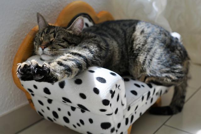 Cat, Adidas, Mieze, Animals, Cat's Eyes, Pride, Kitten