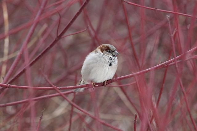 Nature, Tree, Bird, Living Nature, Animals, Little