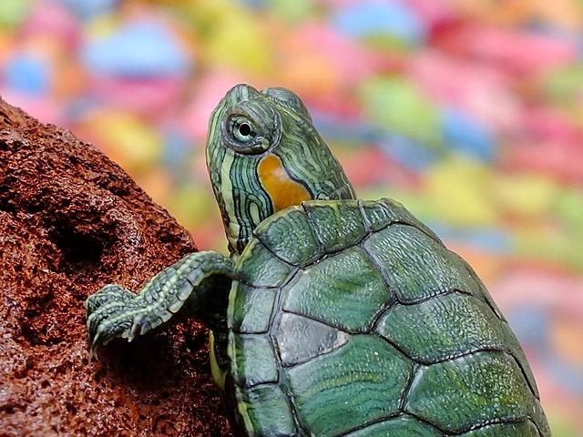 Turtle, Animals, Water Creature, Loggerhead Sea Turtle