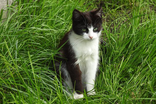 Lawn, Animals, Charming, Nature, Cat, Mammals, Young