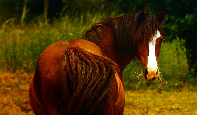 Animal, Ponies, Animals, Brown, Shetland Pony, Mane