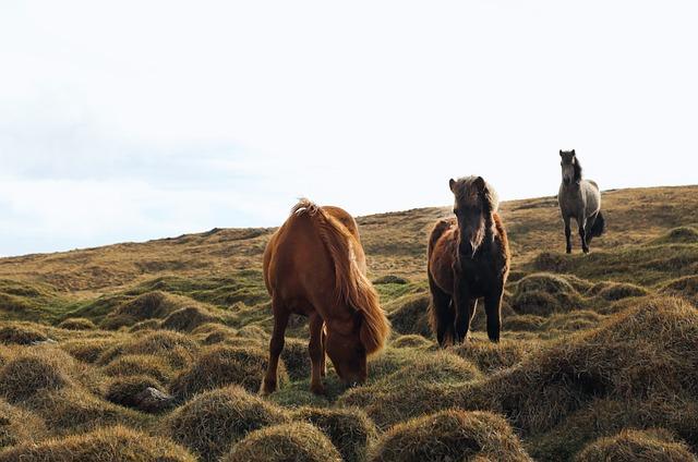 Animals, Horses, Beautiful, Manes, Grazing, Haystack