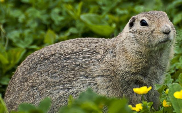 Marmot, Animals, Animal World, Zoo